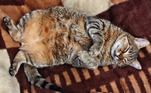 the-50-Plus-Report-Important-Signs-Your-Cat-May-be-Diabetic