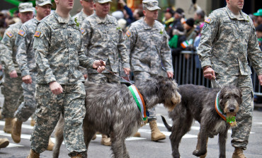 Dogs Train For The Military