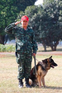 the-50-Plus-Report-Dogs-Train-For-The-Military