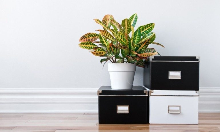 5 Tips on How to Stay Organized