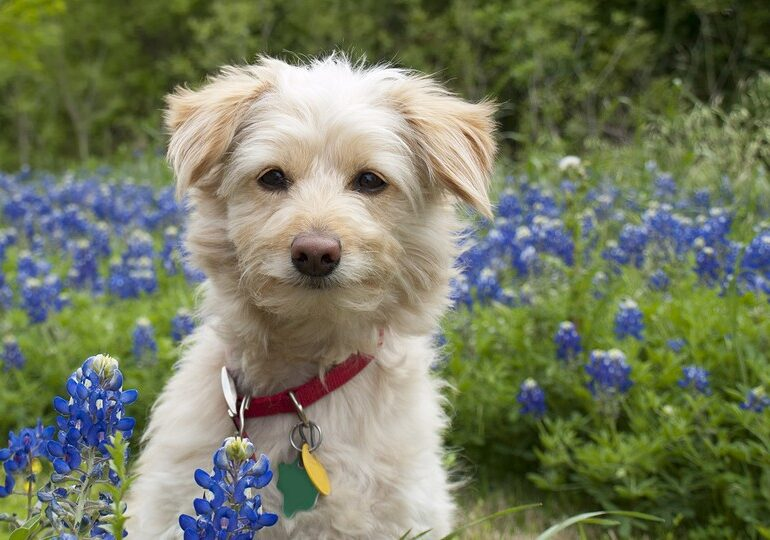 A Natural Flea And Tick Repellant For Your Dog