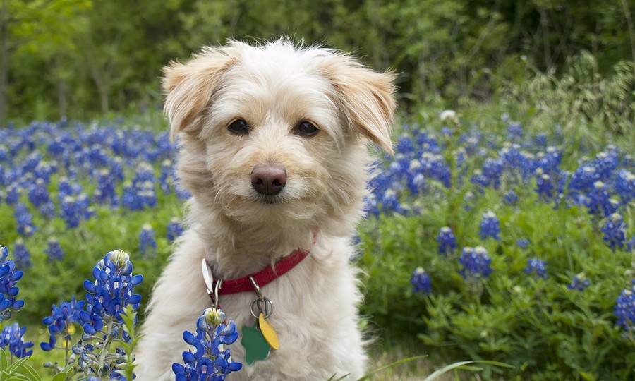 a natural flea and tick repellant for your dog   the 50