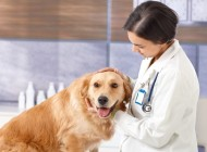 Caring for an Aging Pet