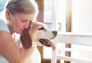 50-Plus-Report-Caring-for-an-Aging-Pet