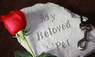 50-Plus-Report-Coping-with-the-Death-of-a-Pet