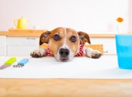 The Most Dangerous People Foods For Dogs And Cats