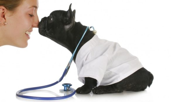 Things To Know About Your Pet's Immunizations