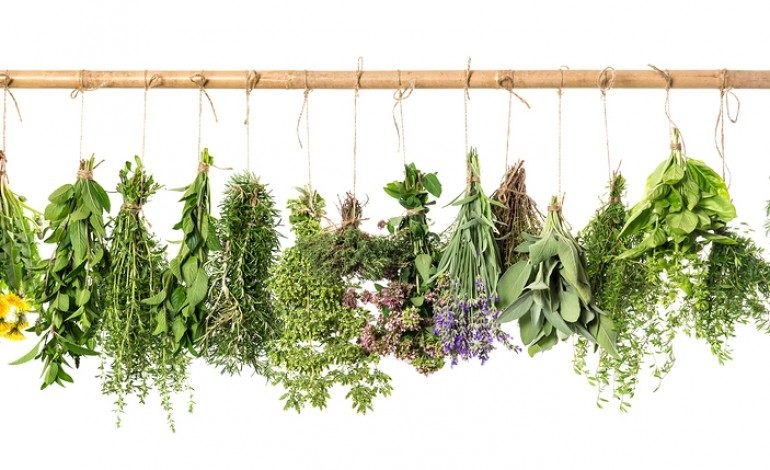 Home Remedies from Your Garden
