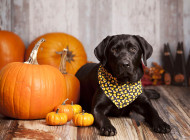 Tips on Pet Safety for the Holiday Season