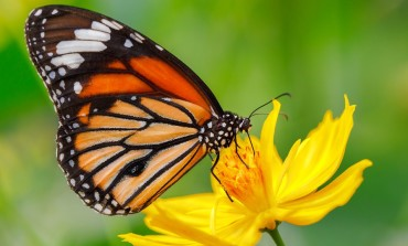 5 Steps to Making Your Own Butterfly Garden