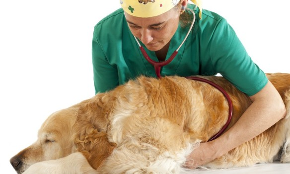 Know How To Administer CPR On Your Pet