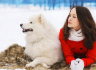 4 Winter Safety Tips for Your Pet