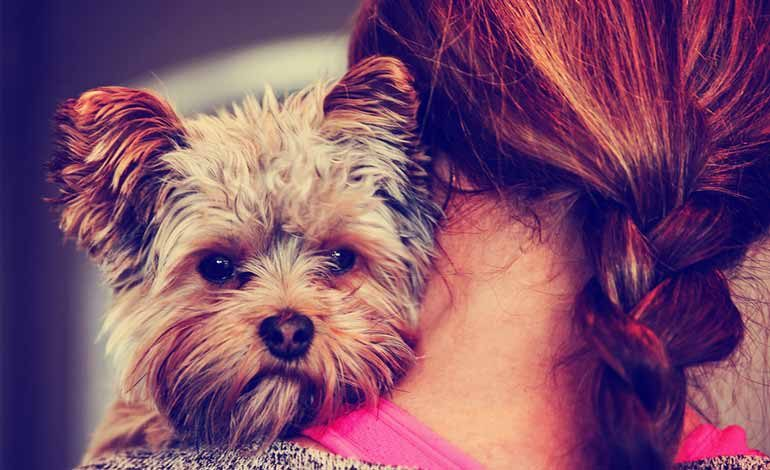 How a Puppy Mill Dog and New Mom Find Love Together